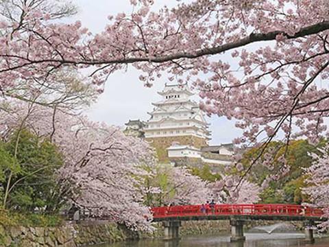 姫路城と桜(提供:姫路市)