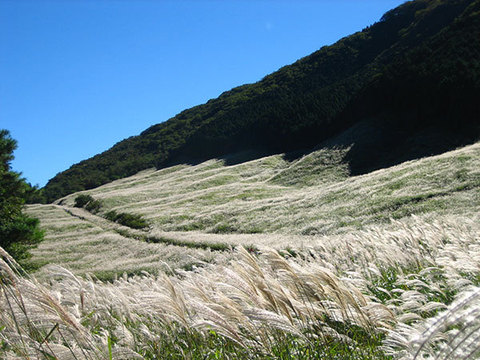 すすき草原イメージ