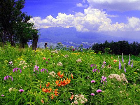 入笠山イメージ
