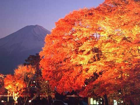河口湖紅葉まつりイメージ