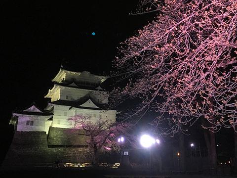 小田原城 夜桜イメージ