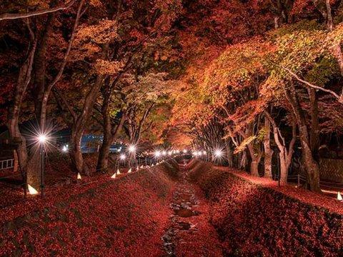 河口湖紅葉祭りイメージ