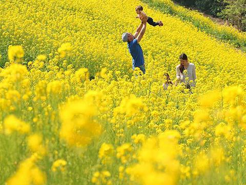 マザー牧場菜の花