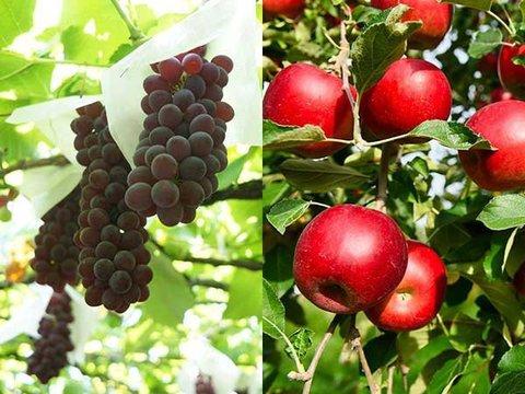 W果物狩りイメージ