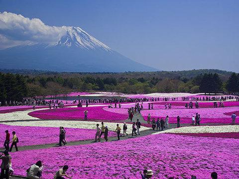 富士芝桜まつりイメージ