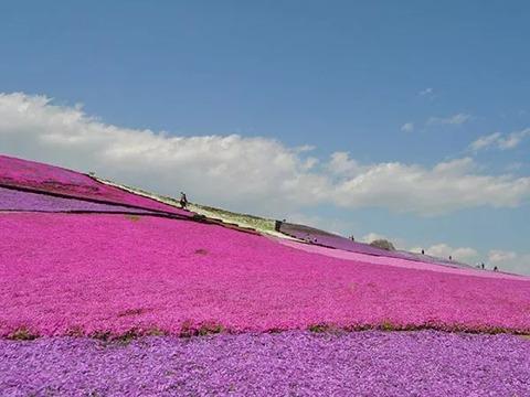 マザー牧場 菜の花イメージ
