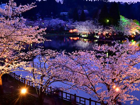 八鶴湖 夜桜イメージ