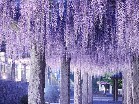 ふじの咲く丘公園イメージ