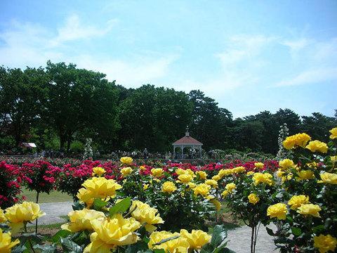 敷島公園 ばら園イメージ