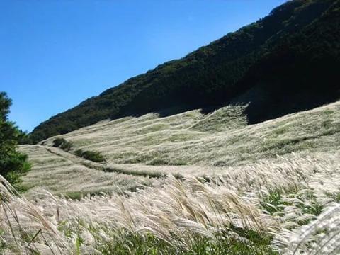 仙石原すすき草原イメージ