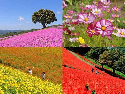 マザー牧場 季節の花