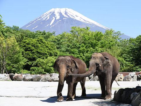 富士サファリパークイメージ