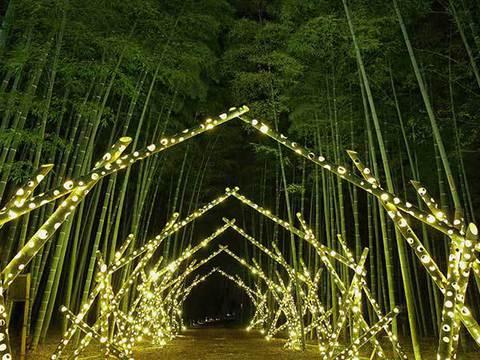 若山農場竹林ライトアップ